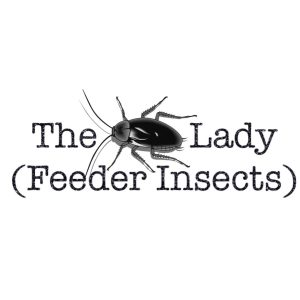 The Bug Lady